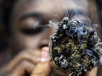 Cannabis Ghana: l'usage du cannabis désormais légalisé