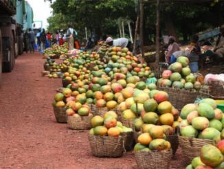 filiere mangue ananas Agriculture: voici ce que es filières ananas et mangue génèrent au Togo