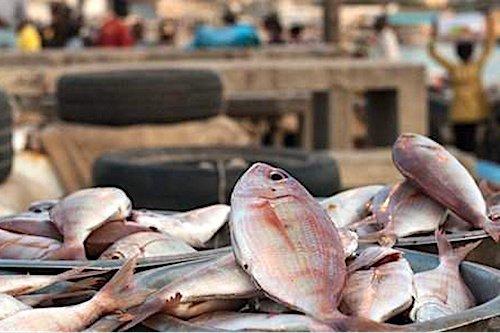 Togo fin des importations illegales des produits halieutiques Togo : fin des importations illégales des produits halieutiques