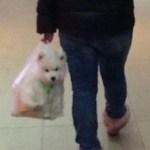 【散歩してないじゃん】中国独特の犬の散歩方法
