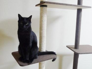 猫がキャットタワーに登らないのはなぜ?登らない理由と対処法