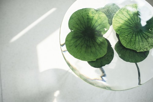 lotus table / industry plus