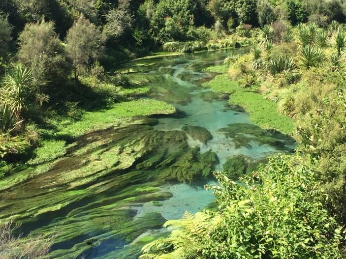 viajar pela nova zelandia blue spring 5