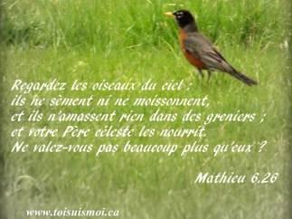 Regardez les oiseaux du ciel : ils ne sèment ni ne moissonnent, et ils n'amassent rien dans des greniers ; et votre Père céleste les nourrit. Ne valez-vous pas beaucoup plus qu'eux ?
