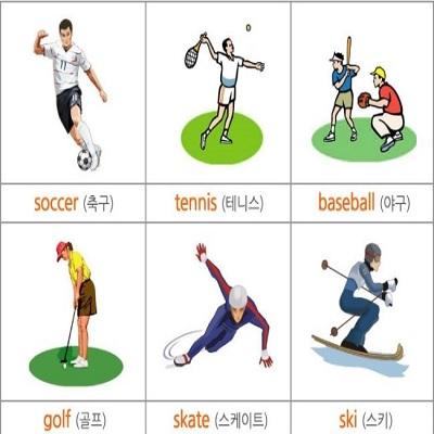 스포츠 종목