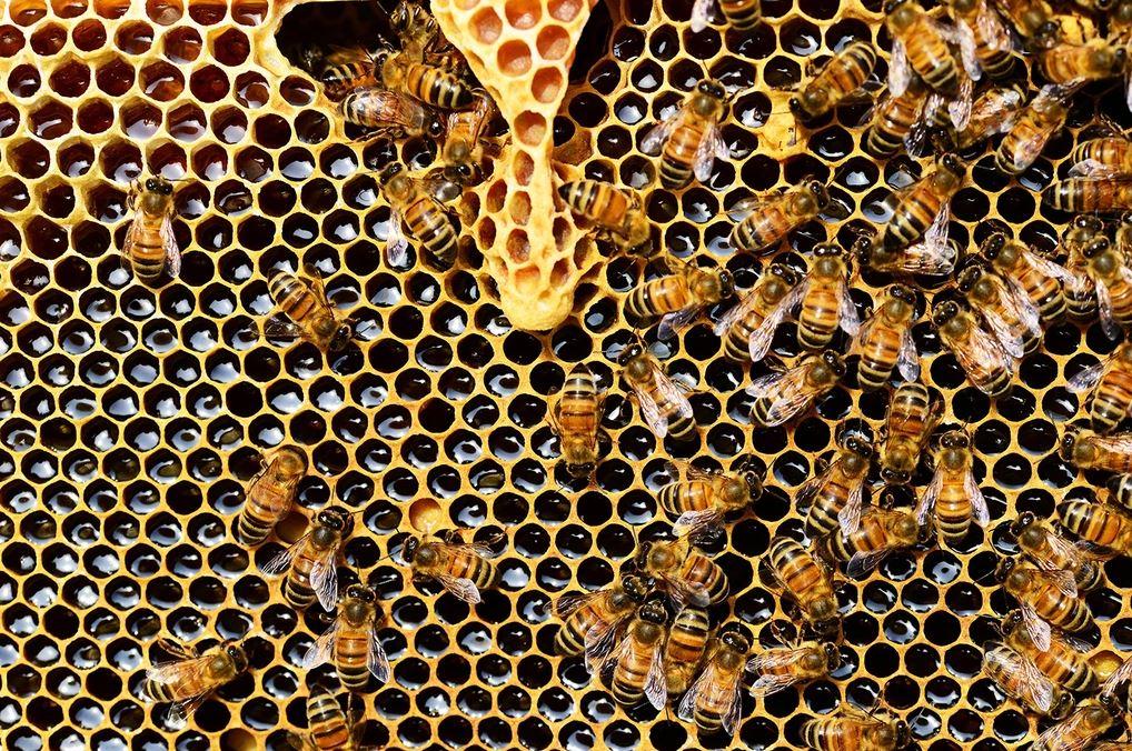 Honingraat bij kaarsenkit