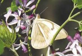 kt-vol-4-12-butterfly1