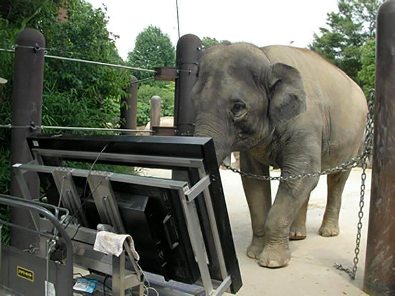 Слон стоїть коло панелі й проходить тест