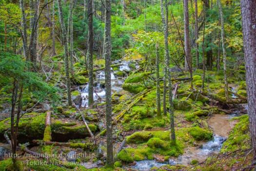 甲武信ヶ岳・千曲川と苔の森