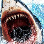 CR JAWS 2 再臨