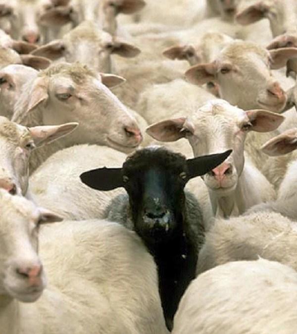 The Black Sheep Gospel