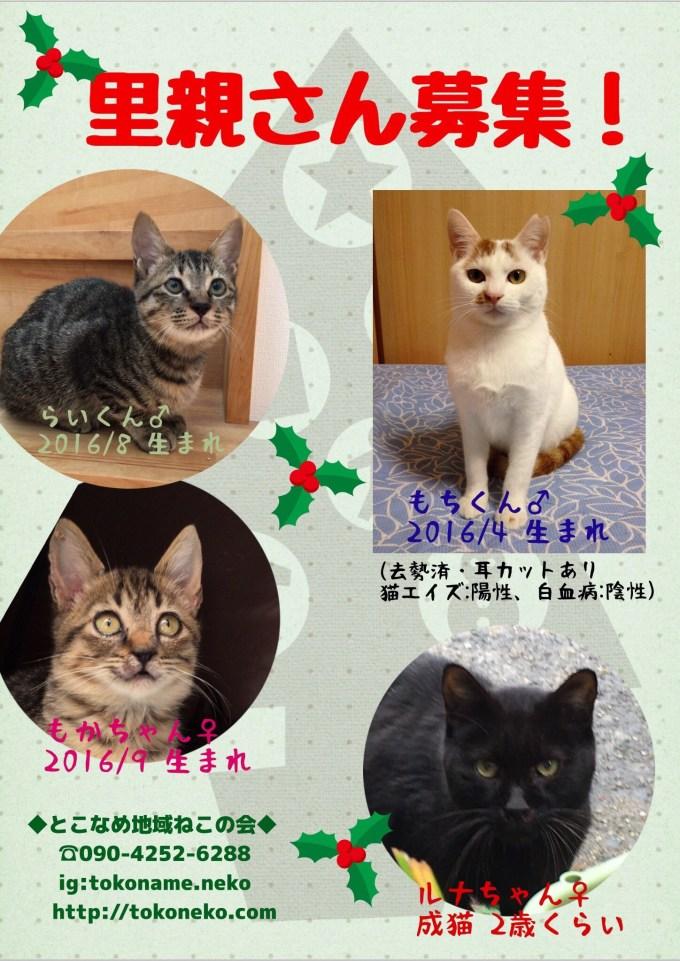 20161114-214049.jpg