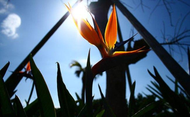 極楽鳥花と言う花 空と海の物語 From奄美大島