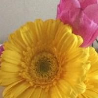 黄色い花とピンクの花