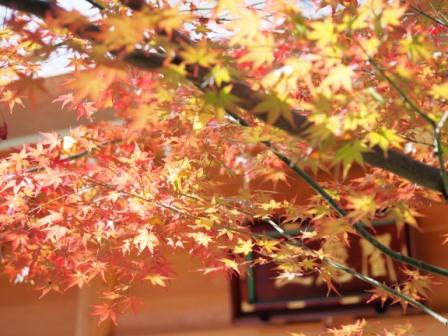 Red maple leaves and Emmado hall