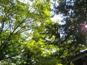 トトロの森 狭山丘陵