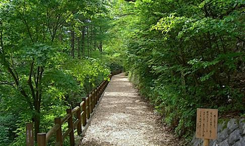 森林セラピーロード「大滝の路」