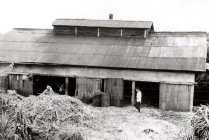 昭和38年から与論工場が操業を開始しました。