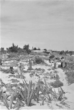 087茶花墓地