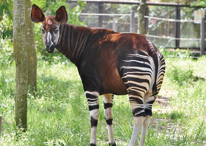 横浜版】よこはま動物園ズーラシアだより 生き物ってオモシロイ ...