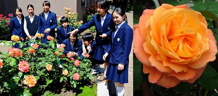 Rozen van Anne Frank Tokyo