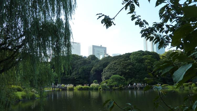Shinjuku-Gyoen park