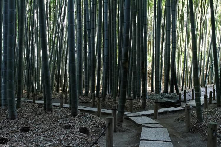 Храм Хококудзи с бамбуковым лесом