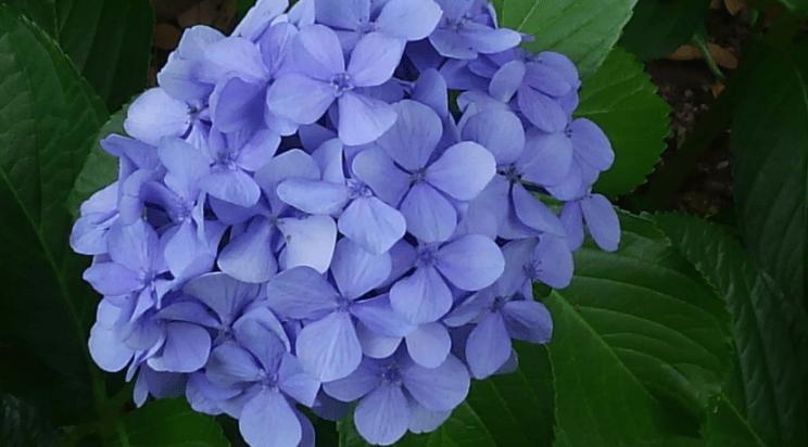 Former Yasuda garden flower
