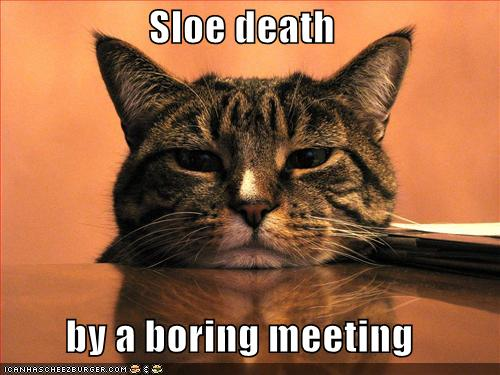 funny-pictures-cat-sleeps-boring-meeting1