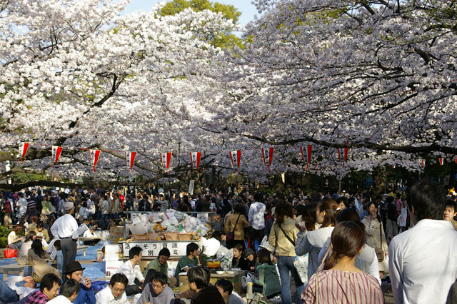 I'm not kidding... it gets REALLY crowded for hanami parties
