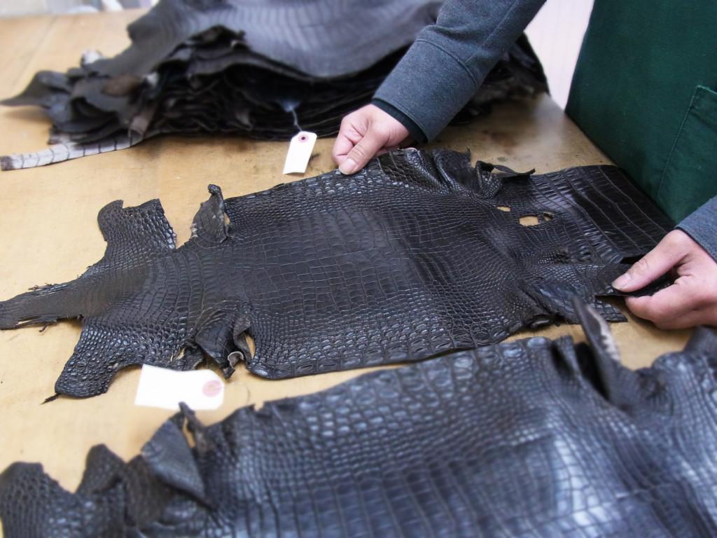 東京クロコダイルの革の選別