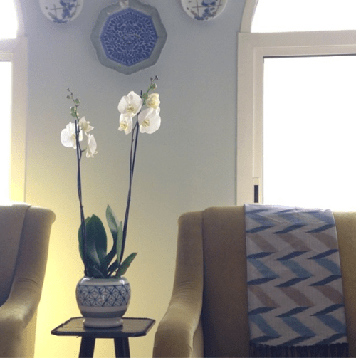 blue and white hibachi orchid