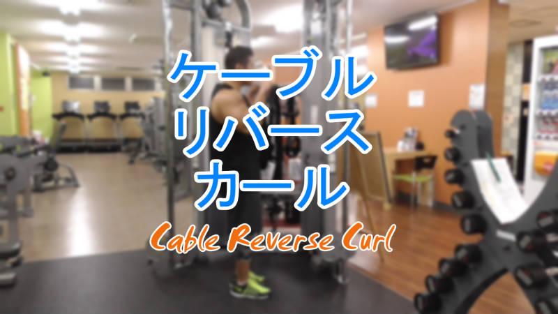 ケーブルリバースカール(Cable Reverse Curl)のやり方とフォーム