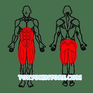 2分割法トレーニング下半身と腹筋