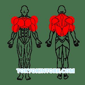 2分割法トレーニング胸と肩と背中と上腕