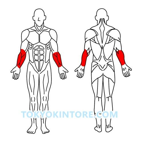 前腕筋を鍛えるやり方とフォーム