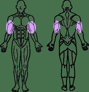 スーパーセット法トレーニング~上腕二頭筋と上腕三頭筋