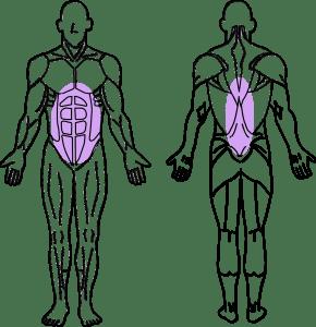 スーパーセット法トレーニング~腹直筋と脊柱起立筋