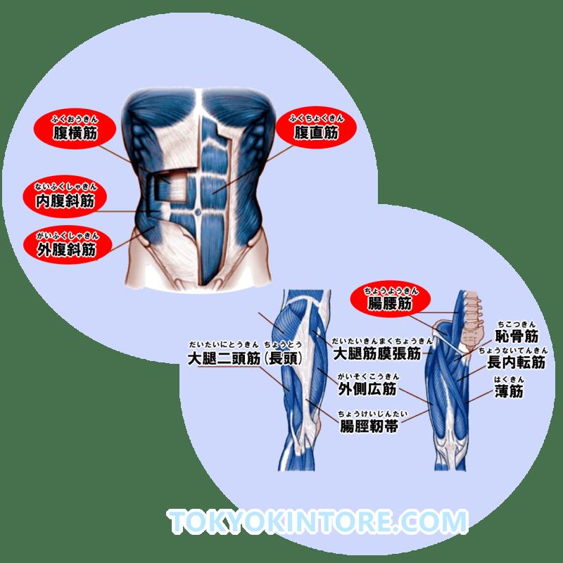 腹筋の筋トレは高負荷が重要!部位別で鍛えるおすすめメニュー