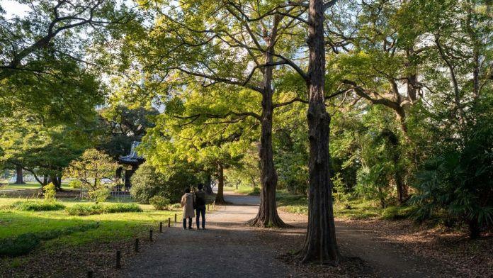 Tokyo Japanese Style Landscaped Gardens