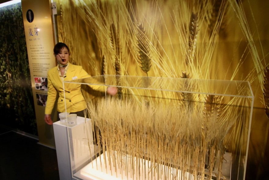 二条大麦麦芽