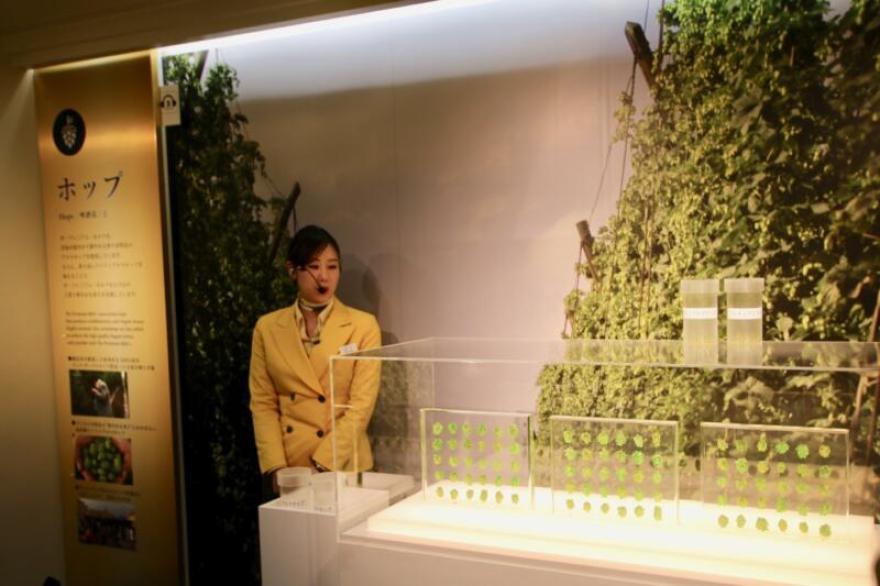 ホップの花の部分が展示