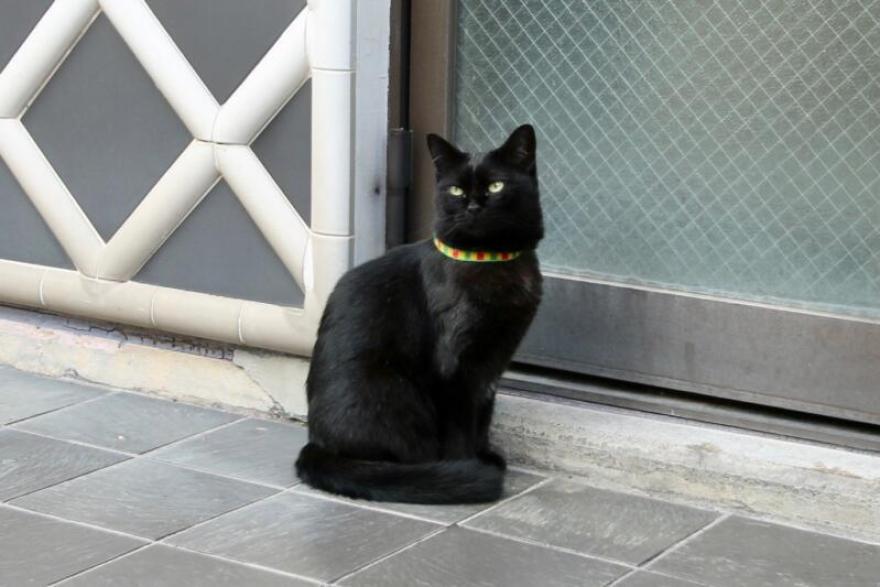 稲取漁港が目の前の旅館「はまべ荘」の看板猫ミーちゃん