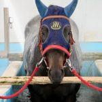 """<span class=""""title"""">プールと温泉でリハビリするお馬たちを見学できるJRAの施設を見てきた【福島いわき】</span>"""