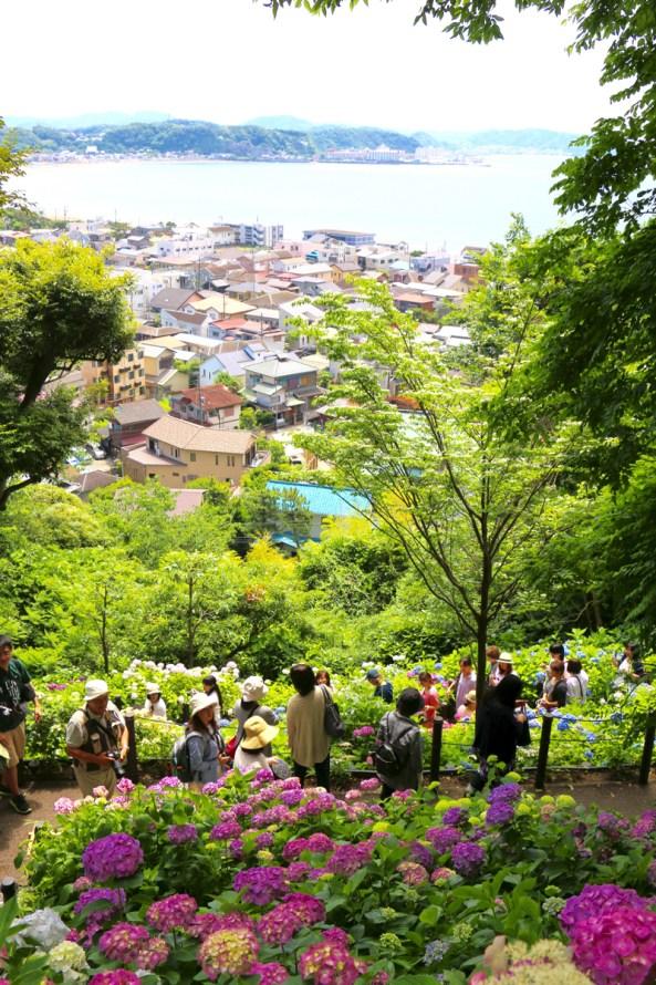 長谷寺のあじさい路