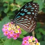 多摩動物公園昆虫生態館
