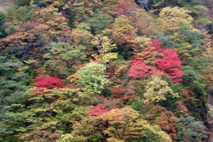 華厳の滝からの紅葉