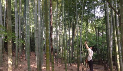 日曜日を振り返る(週刊 東京散歩ぽ5/14)