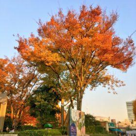 紅葉で染まる「上野恩賜公園」