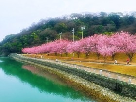 ~The Bloom of Cherry Blossoms 2020 in TOKUSHIMA ~ 徳島で見た桜と城跡公園周辺